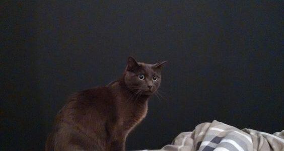 online dating γυναίκα γάτα