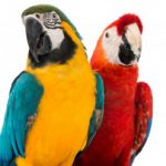 Εικόνα προφίλ του/της Macaw